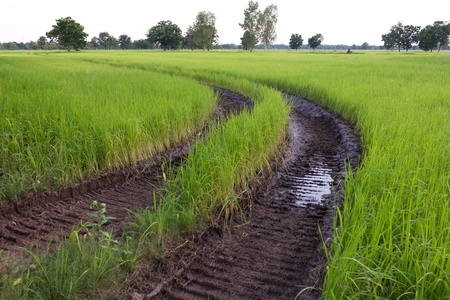 Traces of the wheel in the rice harvest. Stock Photo - 10419306