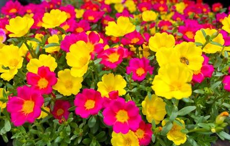 campo de flores: Muchas flores, peque�as flores vendidas del mercado. Foto de archivo