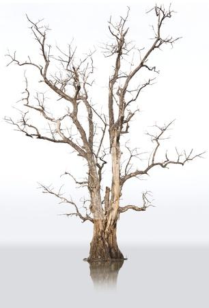 Les arbres morts et secs dans l'environnement, causés par le réchauffement climatique. Banque d'images - 11178573