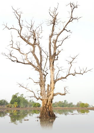 Dead trees and dry in the environment, Caused by global warming.