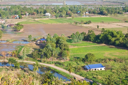 View of the rural areas where rice farming in Thailand. Stock Photo - 11546556