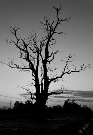 Branches of the tree was dead when the sunset is seen as a scary black. photo