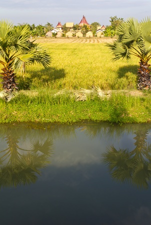 Home overlooking the Rice paddies in Thailand. photo
