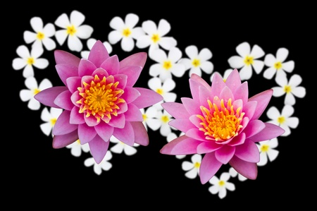 Two Lotus flowers above heart-shaped flowers. photo