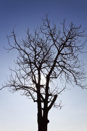 Branches of dead trees and dry under the sun. photo