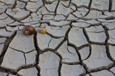 Two shells on the ground cracked. Stock Photo - 11760543