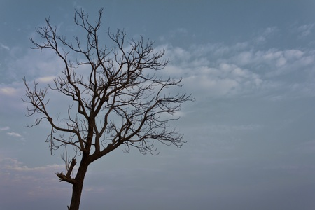 Silhouette of a dead tree in a dry, blue sky. Stock Photo - 12426426