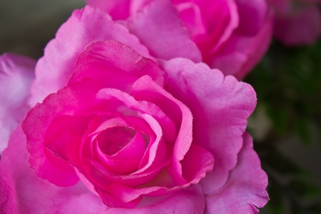 synthetic fiber: Pink artificial roses made ??of synthetic fiber.