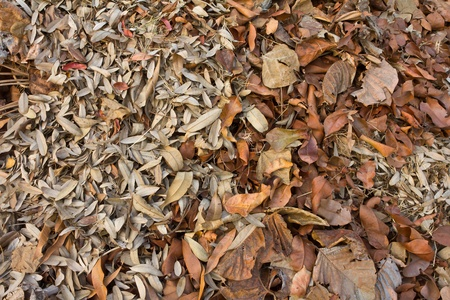 Pile dry leaves are small and a large variety  photo