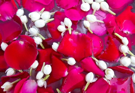 Rose petals and jasmine flowers floating on the water to be played in April