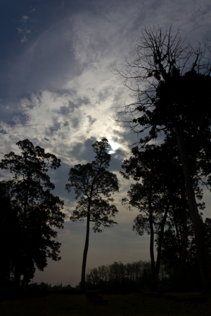 Large trees silhouette, which is shedding new light as she came from the clouds  photo