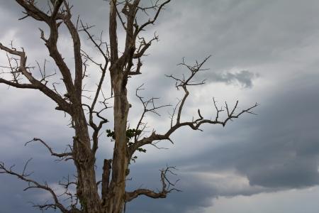moody sky: Nuvoloso sfondo e guardò attraverso i rami dell'albero era asciutto Archivio Fotografico