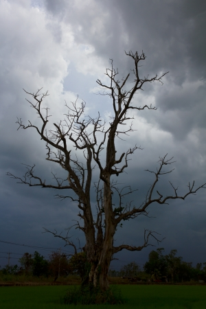 Standing dead trees are located in a rural area surrounded by dark clouds  photo