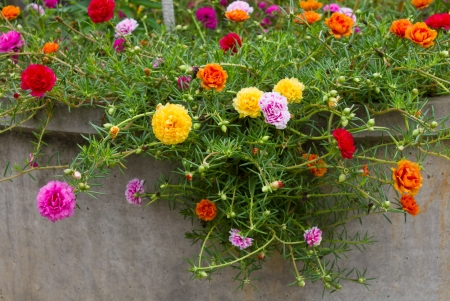 Many small, colorful flowers bloom beautifully on a cement truck  photo