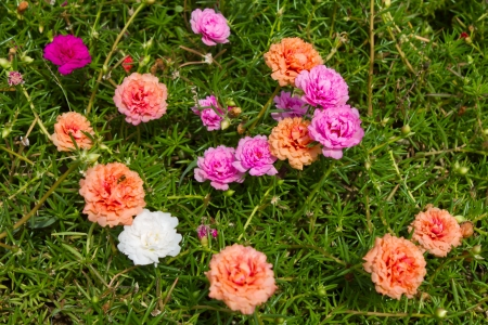 Many small, colorful flowers bloom beautifully  photo