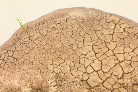 Crops grown on the surface of the soil is crumbly yellow puddle around  photo