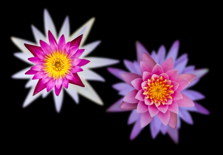 Lilies with purple, pink, white and stacked on a black background Stock Photo - 14618250