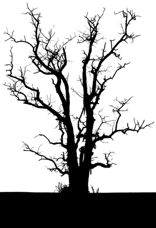 Isolate the silhouette of a tree with no leaves in the solitude is horribly spooky  photo