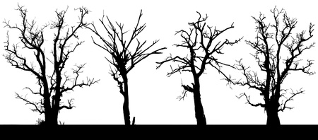 Panorama silhouette of a dead tree in four isolates from the drought Stock Photo - 15113990