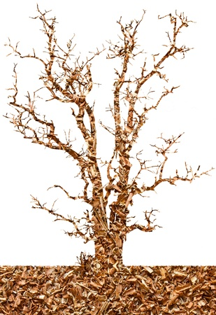 Abstract background of sawdust in the tree of meaning to the destruction of forests  photo