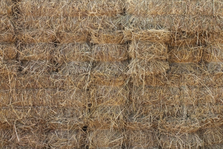 compressed rice: Compressed straw from rice background in farming in Thailand  Stock Photo