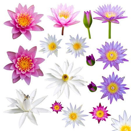 Isolate many lotus flowers with small colorful flowers, a variety of perspectives