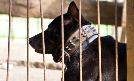 Black dog collar, which had been held in captivity stupidly Stock Photo - 17602074