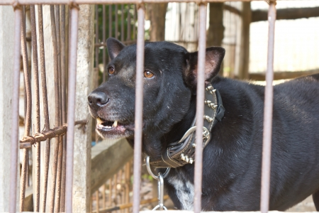 Black dog was out of sight up to the outside of the enclosure to the poor martyr Stock Photo - 17602083