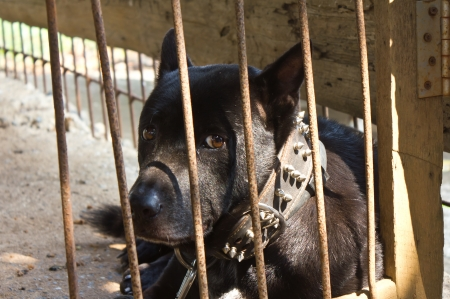 Black dog was out of sight up to the outside of the enclosure to the poor martyr  Stock Photo - 17602092
