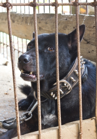 Black dog was out of sight up to the outside of the enclosure to the poor martyr Stock Photo - 17602082