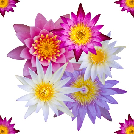 Isolated top view of colorful lotus flowers many of which are isolated top view of colorful lotus flowers many of which are overlapping photo mightylinksfo Images