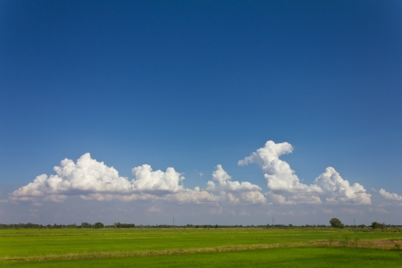 Natural scenery on the green rice fields, which are sky clouds beautiful  photo