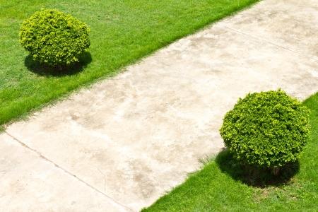 Vue depuis le haut du pavé en béton dans un champ d'herbe et de buissons à côté Banque d'images - 20603912