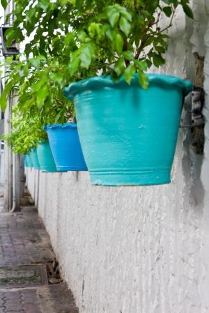 side colgaba una hilera de arbustos en maceta con verde, azul