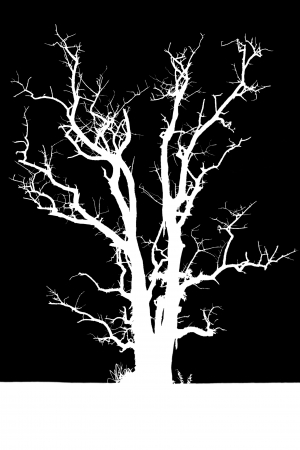 horribly: Isolate the silhouette of a tree with no leaves in the solitude is horribly spooky