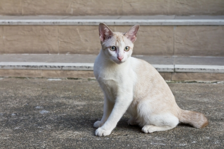 Cat creamy white facing, seated on the concrete stairs  photo