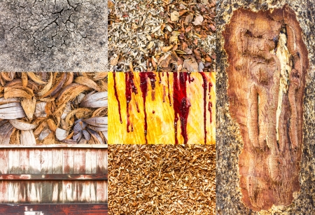 Collection of rubber wood, coconut shells, dried leaves, sawdust and wood walls  photo