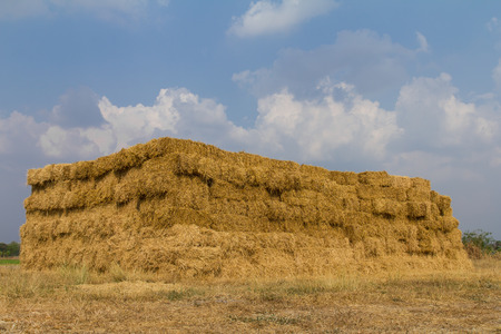 View of straw bales that lined rectangular pile up big on the ground  photo