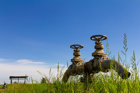 Low angle valves of the irrigation pipe is set amidst weeds, and sky  photo
