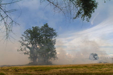 Smoke from burning rice stubble near trees and bamboo  photo