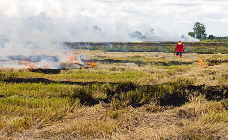 Farmers in Thailand are set fire to straw stubble in rice cultivation  photo