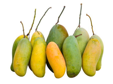 Isolated of Mango, green and yellow are both large and small  photo