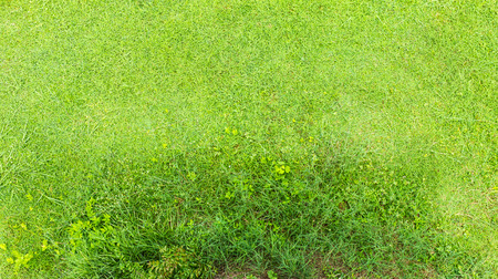 unevenly: View of the above, green grass grows unevenly   Stock Photo