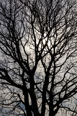 dead tree: Close-up details of a dead tree Silhouette with solar sky  Stock Photo