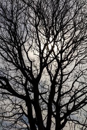 toter baum: Close-up-Informationen von einem toten Baum Silhouette mit Solar-Himmel Lizenzfreie Bilder