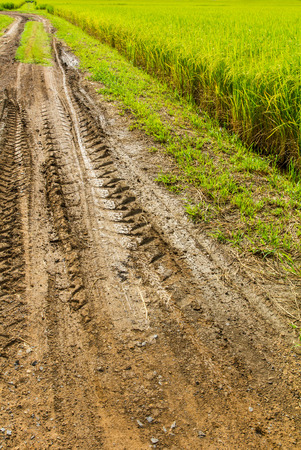 Traces wheel vehicle on a dirt road near the rice fields  photo