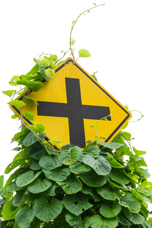 grew: Vine leaves, weeds grew up and choked intersection traffic signs