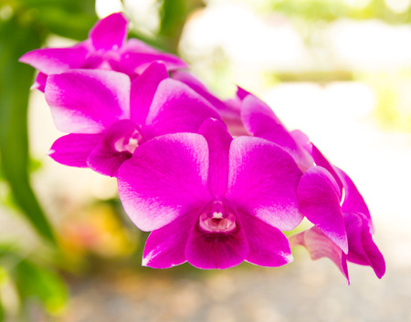 indefinitely: Beautiful purple orchid petals with the blur out indefinitely.