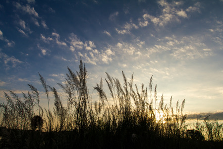 Silhouette beautiful scenery grass under the sun rises in the early morning. photo