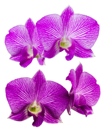 isolates: Isolates purple orchids two views of four different beautiful flowers. Stock Photo
